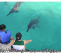 dolphinfeed (1)